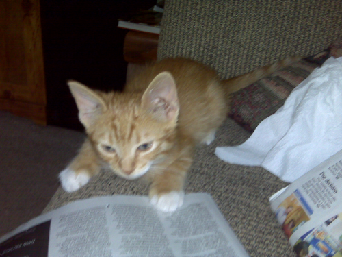 Copper likes to read