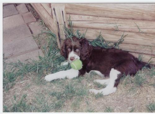 Baby Ben 2003