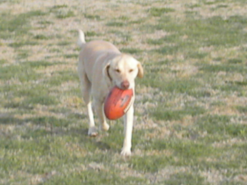 BUDDY PLAYING FOOTBALL